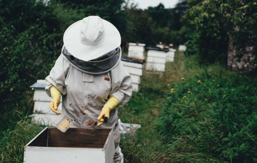 Beekeeping courses at Rutgers University