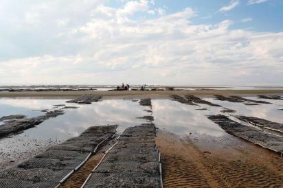 The Delaware Bay mud flats