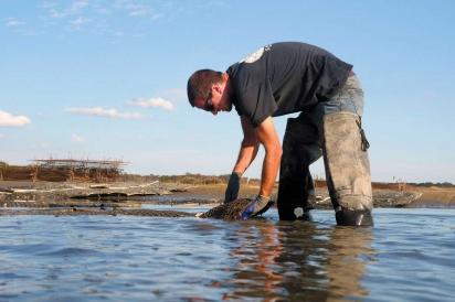 Brian Harman, oyster farm manager