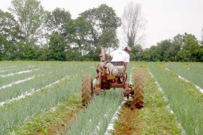 Cherry Grove Organic Farm