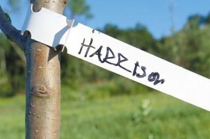 Harrison apple tree