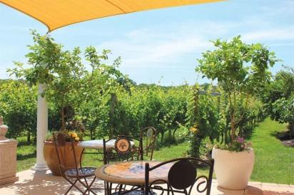 turdo vineyards