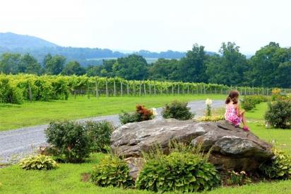 overlooking vineyard