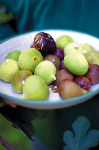 Harvest Figs