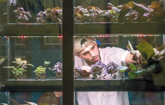 Kitchen staff member Brendan McEvoy of Marcus B&P tends to the indoor garden