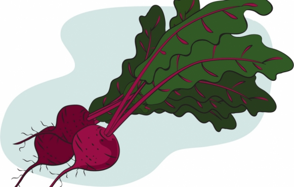 beets illustration