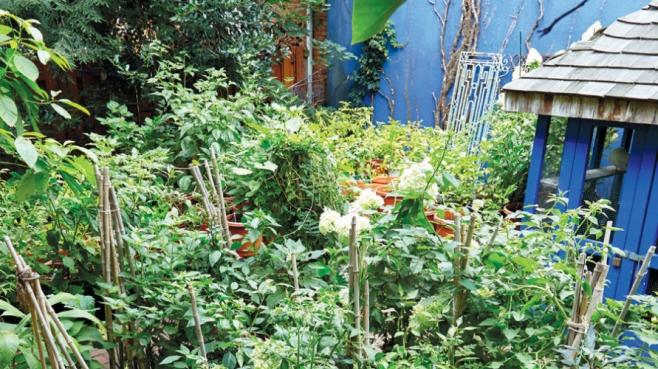 Maricel Presilla's pepper garden in Weehawken.