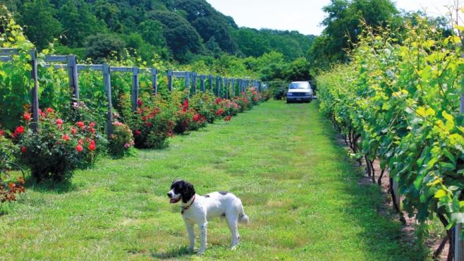 Turdo Vineyards and Winery